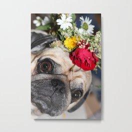 Flowers pug Metal Print