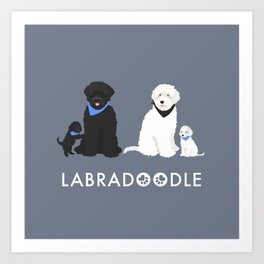 Labradoodle black and white Art Print
