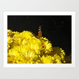 The Butterfly & the Flower... Art Print