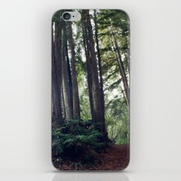 redwood forest iPhone Skin
