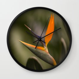 Singing Bird Wall Clock