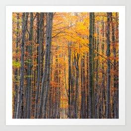 Stunning gold autumn forest Art Print