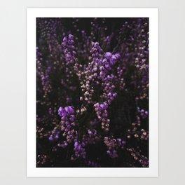 Wildflower Series - Heather Tongariro National Park Art Print