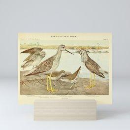 Vintage Print - Sandpipers & Yellowlegs, from Birds of New York (1910) Mini Art Print