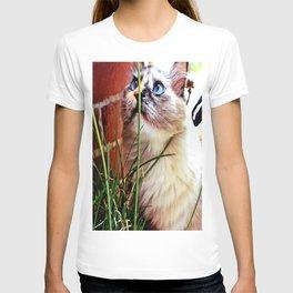 Inquisitive Cat T-shirt
