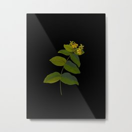 Hypericum Androsaemum Mary Delany Vintage Botanical Collage Paper Flowers Metal Print