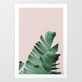 Banana leaf, Plant, Green Pink Art Print