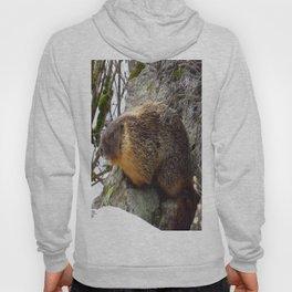 Winter Marmot Hoody