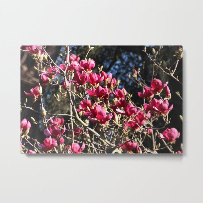 Beautiful tree Metal Print