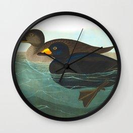 Scoter Duck Vintage Scientific Bird & Botanical Illustration Wall Clock