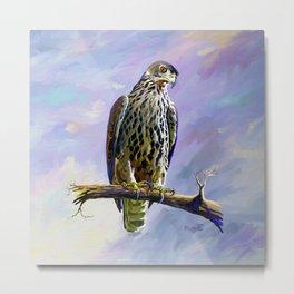 Ayres's Hawk Eagle Metal Print