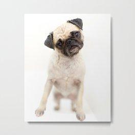 Pug in a Tub Metal Print