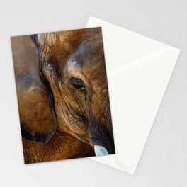 Elephant Experience Stationery Cards
