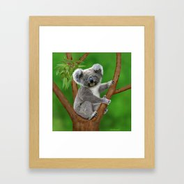 Blue-eyed Baby Koala Bear Framed Art Print