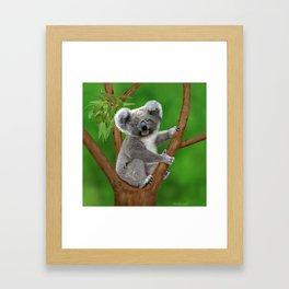 Blue-eyed Baby Koala Bear Framed Art Print