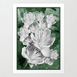 White tulip tree (Liriodendron tulipifera) Putnam Lake New York 1  Art Print