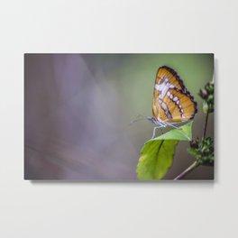 Walnut Creek Butterfly Metal Print