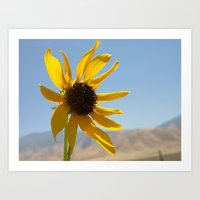 Cali Central Valley Daisy Art Print