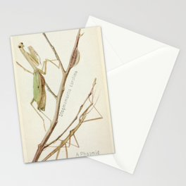 Mantid And Stick Insect Stationery Cards