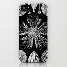 Sand Dollars (Echinidea) by Ernst Haeckel iPhone Case