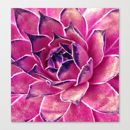 Suculenta Violeta Canvas Print