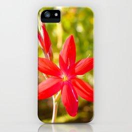 Schizostylis coccinea flower iPhone Case