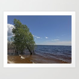 Tree in the lake Art Print