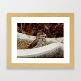 A quick dip Framed Art Print