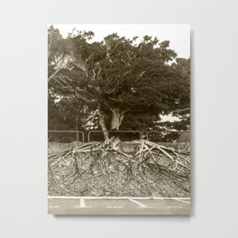 Our roots - tree with massive root network Metal Print
