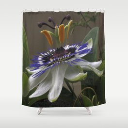 Close Up of Beautiful Passiflora Flower Shower Curtain
