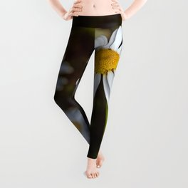 Daisy in all its glory Leggings