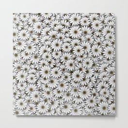 Daisies pattern Metal Print