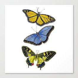 3 Butterflies Canvas Print
