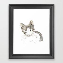 Humphrey the cat Framed Art Print