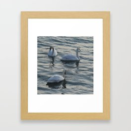 Icewater Swans Framed Art Print