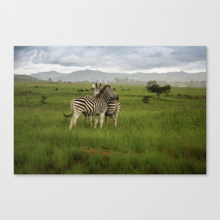 Swaziland Zebras Canvas Print