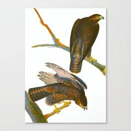 Black Warrior Bird Canvas Print