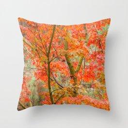 Japanese Maple in autumn Throw Pillow