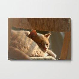 Cat Nap Metal Print
