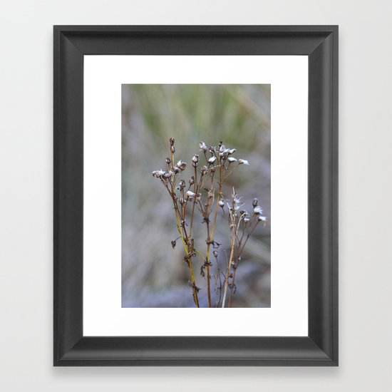 Frosty Seeds Framed Art Print