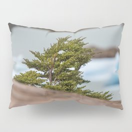 Patagonian Tree Pillow Sham