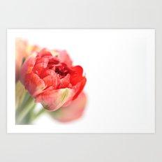 Peony Tulip... Art Print