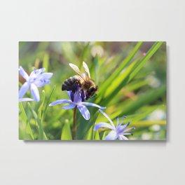 Bee and Blue Flower Metal Print