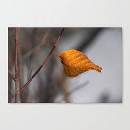 Lone Fall Leaf Canvas Print