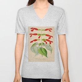 Salvia gesneriflora Vintage Botanical Floral Flower Plant Scientific Illustration Unisex V-Neck