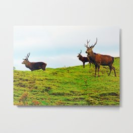 Stags on the hill Metal Print