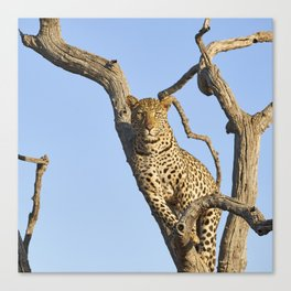The Leopard - The Look Canvas Print