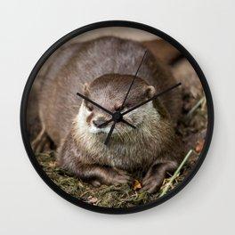 Sunning Otter Wall Clock