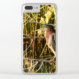 Green Heron Clear iPhone Case