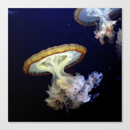 Japanese Sea Nettles Canvas Print